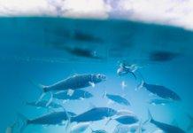 Изменения на мировом рыбном рынке