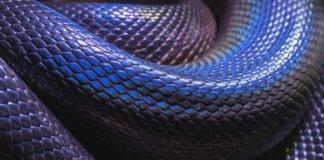 Змеи на острове Фукуок