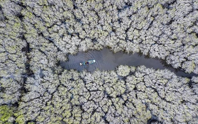 Мангровые леса Вьетнама, Кван Гай
